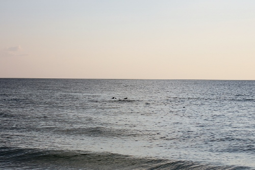 dolphins at tradewinds