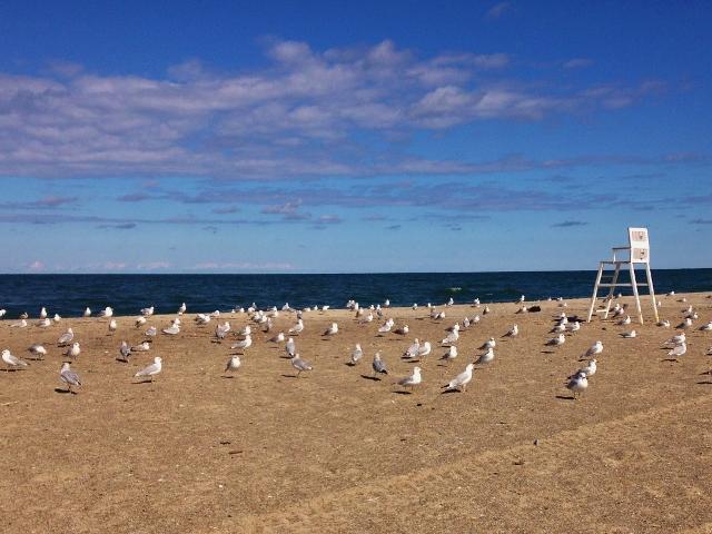 Beach near Erie, PA