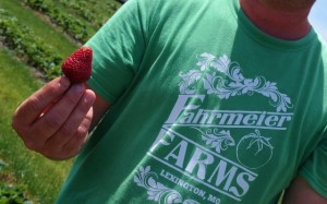 Fahrmeier U-Pick Strawberries | In Johnna's Kitchen